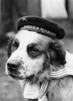 picture of Bamse with navy hat